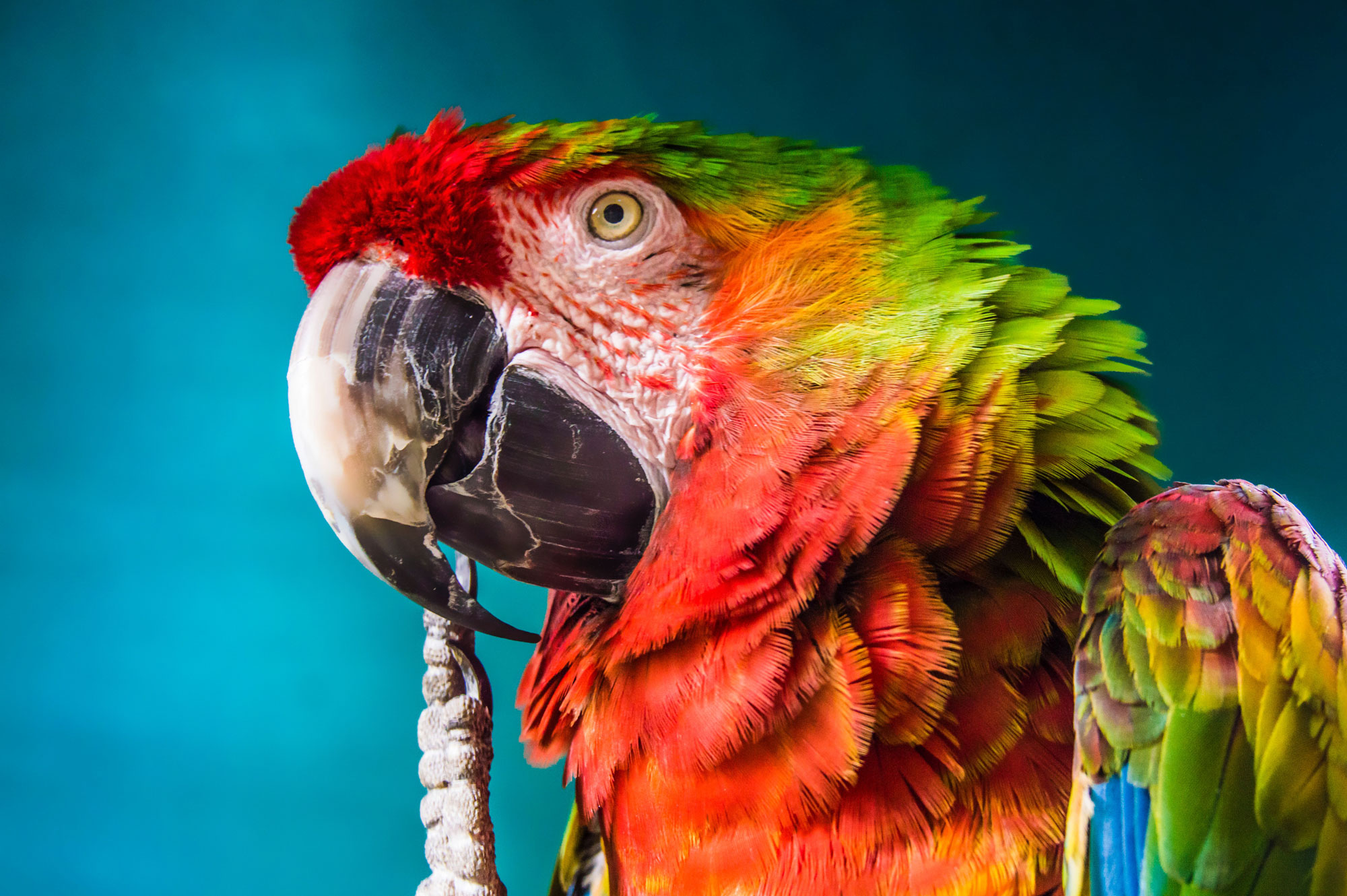 The Brave Parrot: Being Small in a Big, Troubled World
